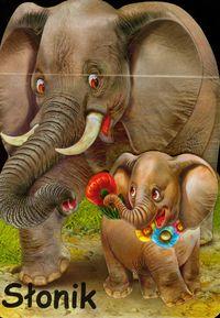 Słonik - brak